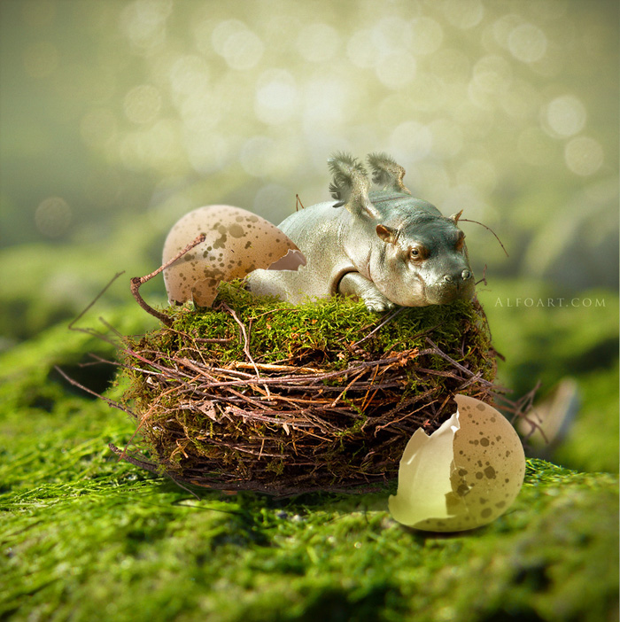 hippo, photoshop, nest, egg, shell, flying hippo, cute, baby, wings, hippopotamus, feathers, humor, funny