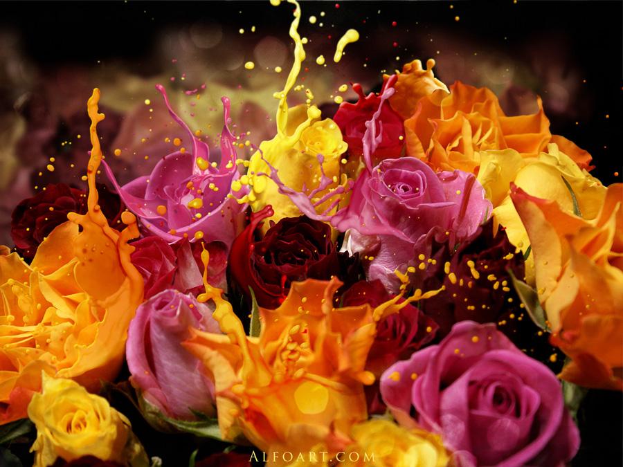 http://alfoart.com/images/roses_splash/roses_900.jpg